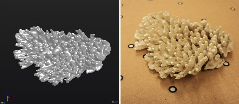 3D_Scanning_Real_Coral